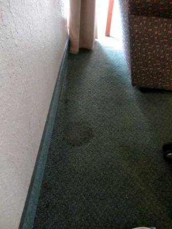 Hawthorn Suites by Wyndham Troy MI : More Stains