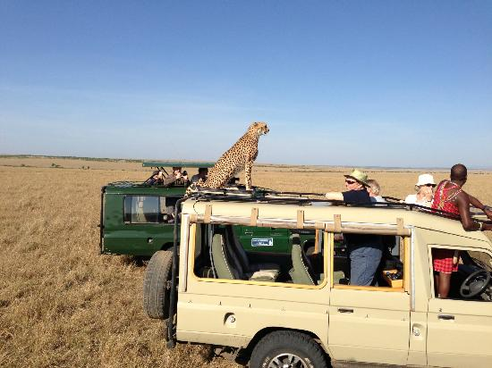 Naibor Camp: this cheetah experience was amazing!