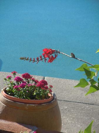 Westward Look Wyndham Grand Resort and Spa : Hummingbird by the pool