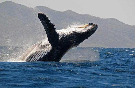 Wildlife Connection: Whale Watching once in a lifetime