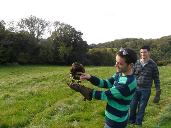 ‪‪West of England Falconry‬: The birds even let you touch their belly after they eat