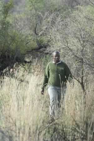 Buffalo Ridge Lodge: Lazarus searching the buffalos