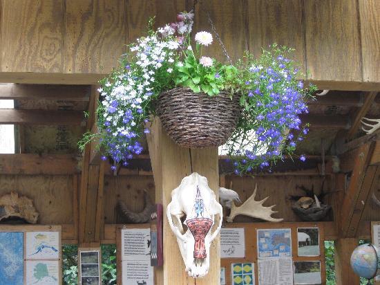 Juneau Rainforest Garden: Native art on black bear skull