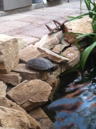 Milo's Inn at Boulder: resident turtle