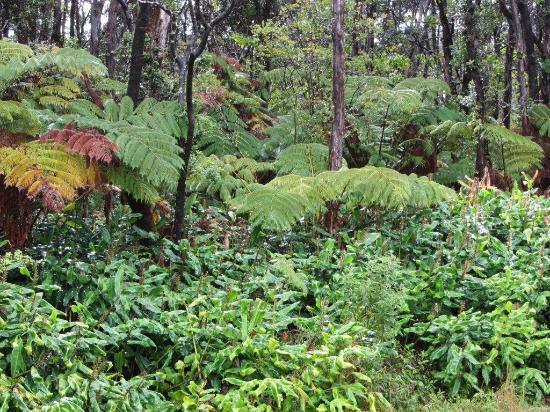 Volcano Forest Inn: Jungle flora surrounding the Inn