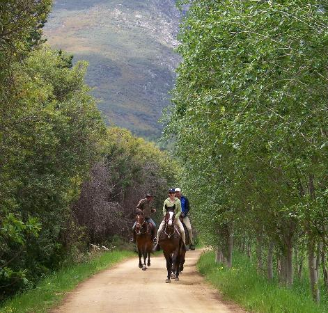 Horse About Trails: Fantastic horses, magnificent trails - the best horse riding in the Western Cape