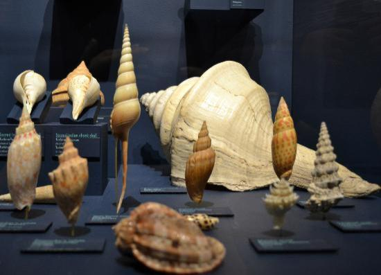 Shell Photography Exhibition : Harvard museum of natural history cambridge all