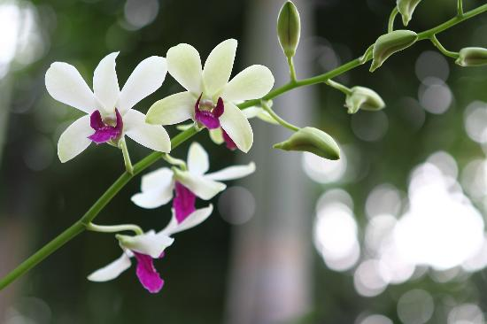 Centara Kata Resort Phuket: Lovely garden filled with orchids