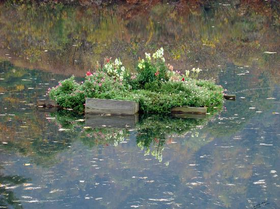 The Apple Barn and Country Bake Shop: View of the pond while sitting and eating your treat