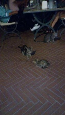 ‪‪L'Ambiance Resort Bodrum‬: Begging Faral cats every meal time