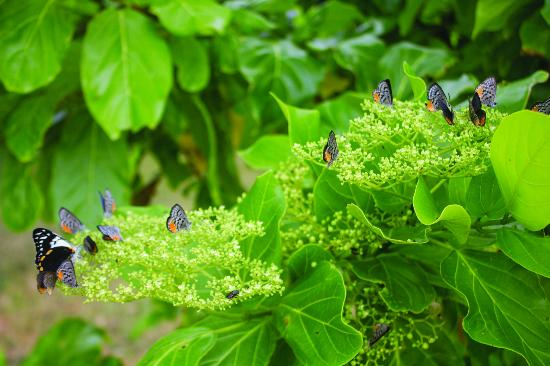 Tranquillity Island Resort & Dive Base: Butterflies on the way to the beach house