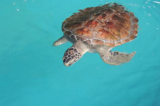 Aracaju Aquarium - Tamar