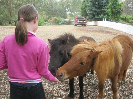 Aaronlee Retreat: My daughter feeding the ponies