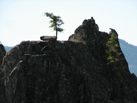 Castle Crags State Park: sleeping rock and solitary tree