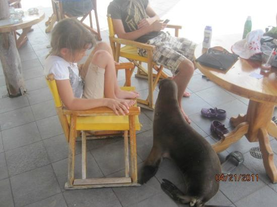 Hotel Solymar : A sea lion visitor! What a surprise!