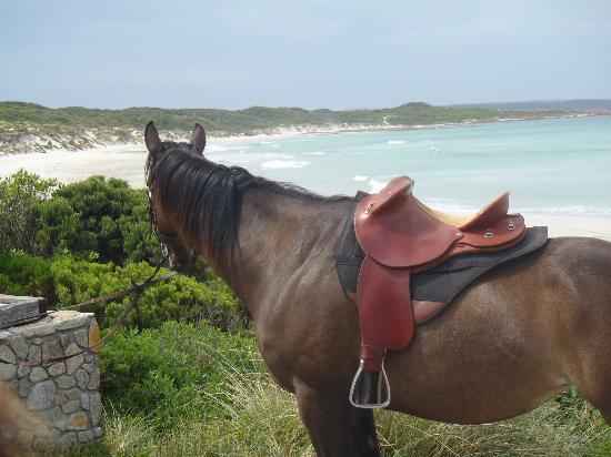 King Island Trail Rides: Overlooking British Admiral Beach