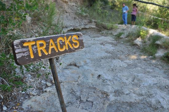 "Dinosaur Valley State Park: A shallow bed of highly-eroded tracks at viewing area ""2""."