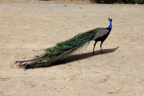 Parndana Wildlife Park 이미지