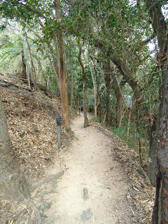 Thala Beach Nature Reserve: Walkway to room