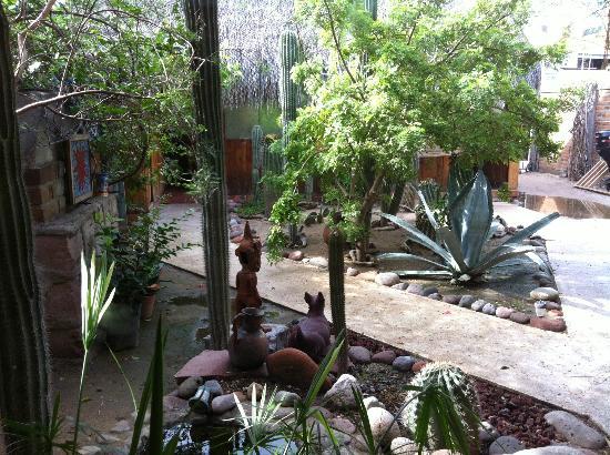 Baja Paradise: garden area