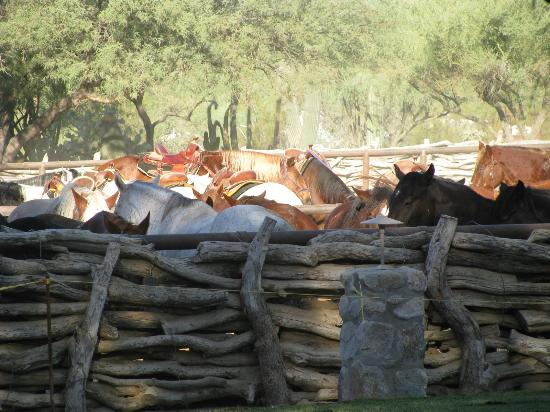 Tanque Verde Ranch: Corral with horses