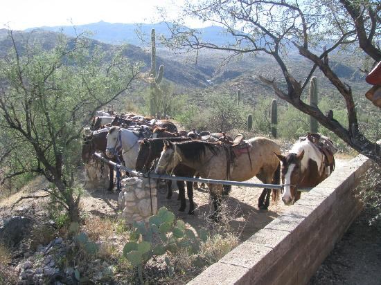 Tanque Verde Ranch : Breakfast ride