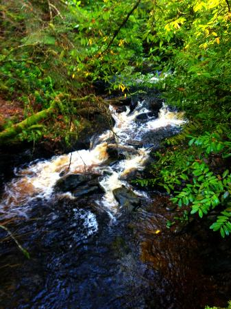 Stonefield Castle Hotel : Stream running through hotel grounds to Loch Fyne