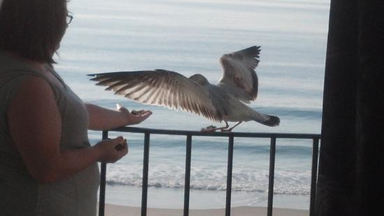 Polynesian Oceanfront Motel: Lacy playing seagulls from our balcony!