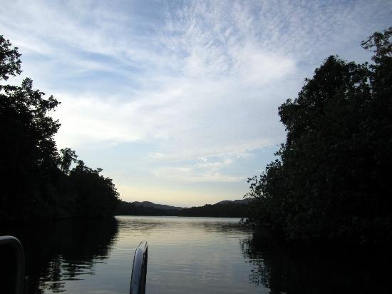 Dan Irby's Mangrove Adventures: daintree river