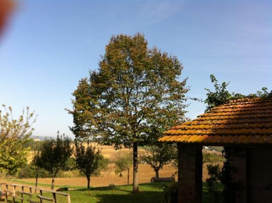 B&B LeCorbu: garden view