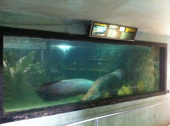 National Zoological Gardens of Sri Lanka: large fish in tiny containers