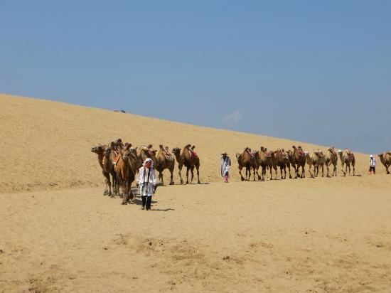 Shahu Nature Tourist Area: Camels waiting for riders