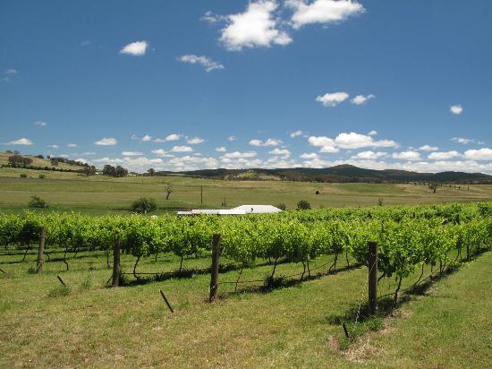 Moody's Wines照片