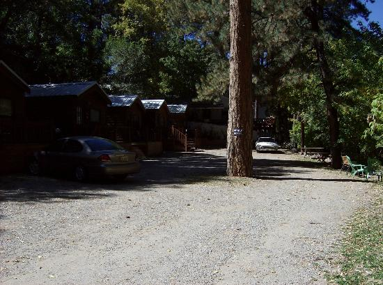 Cottage Central Cabins: small cabins out back, see how I had to back car in past big tree