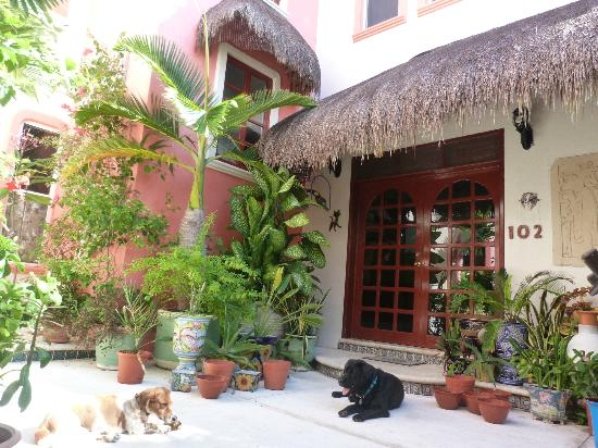 Casa Gatos: Friendly dogs