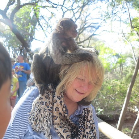 Thorntree Tours and Safaris Day Tours