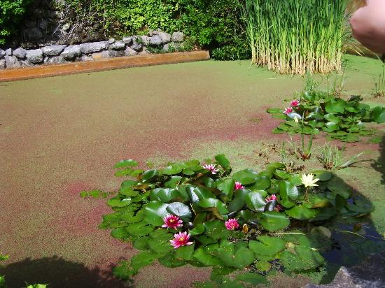 Picture of jardines de santa clotilde for Jardines de santa clotilde