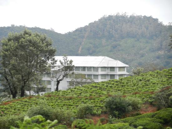 Heritance Tea Factory: The approach to the hotel