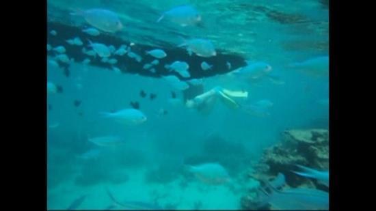 Define Snorkeling