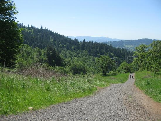 Eugene, OR: The trail looking innocently flat when in actuality it's quite steep.