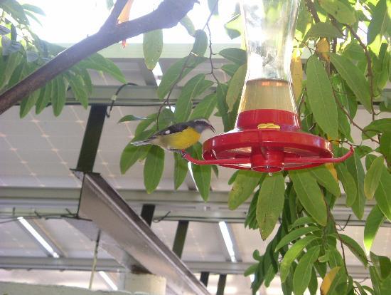 Island View Guest House: Bird