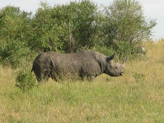 Sarova Mara Game Camp: My first rhino.