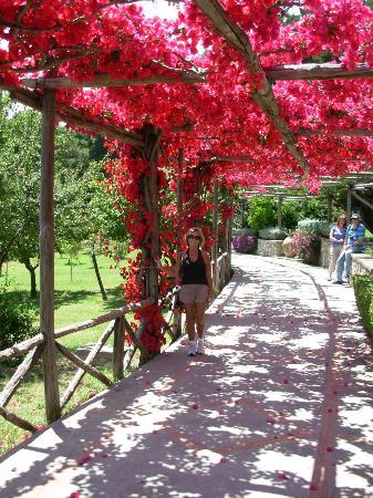 Hotel Weber Ambassador Capri: One of the beautiful walks on the way to the Via Krupp