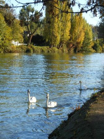 Val-de-Marne, France : The river Marne in Saint-Maur-des-Fossés