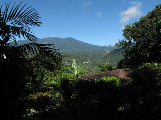La Montana y el Valle Coffee Estate Inn: A view from the room