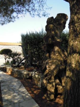 Corallo Eco Wellness Hotel: giardino