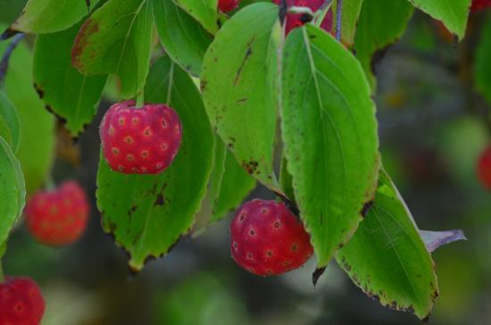 Quarryhill Botanical Garden: ?