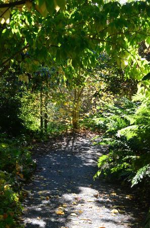 Quarryhill Botanical Garden: pathway