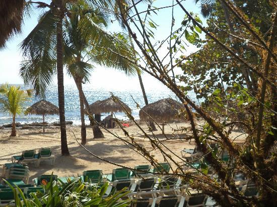 Viva Wyndham Dominicus Beach: Playa muy agradable con sombra de palmeras