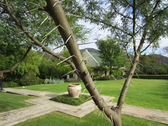 The Thorntree Country House: Thorn Tree